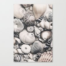 Sea Shell Collection vintage style monochrome Canvas Print