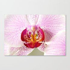 Pink points orchid 35 Canvas Print