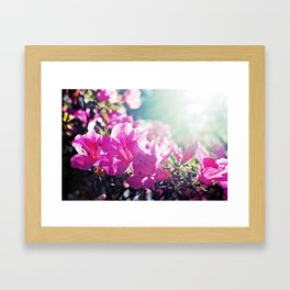A Flare of Spring Framed Art Print