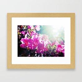 A Flare of Spring Framed Art Print