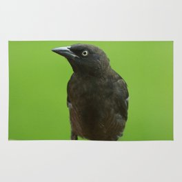 Black Bird Common Grackle Rug