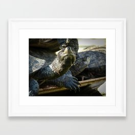 Turtles in front of the Angurukaramulla Temple Framed Art Print