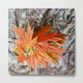 Leaf Sprouts Metal Print