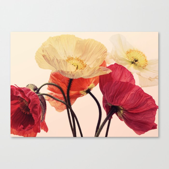 Posing Poppies - bright, vintage toned poppy still life Canvas Print