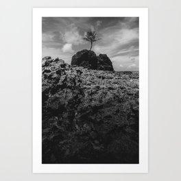Coconut tree on the rocks of Tambaba beach Art Print
