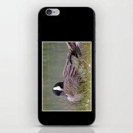 coy goose iPhone Skin