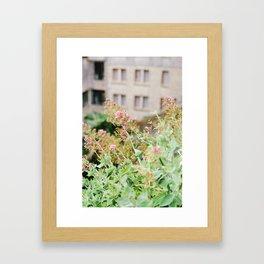 Flowers on Film Framed Art Print