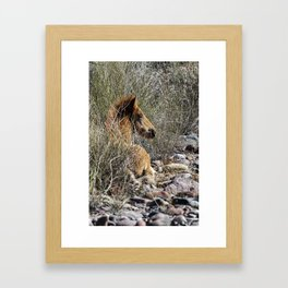 Salt River Foal Finding A Spot to Rest Framed Art Print