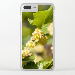 beautiful young currant Clear iPhone Case