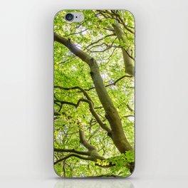 Beech Tree iPhone Skin