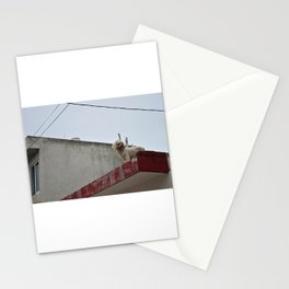 Furry Friends - Isla Mujeres, Mexico Stationery Cards