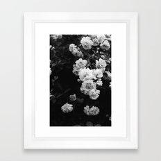 Tumbling Roses Framed Art Print