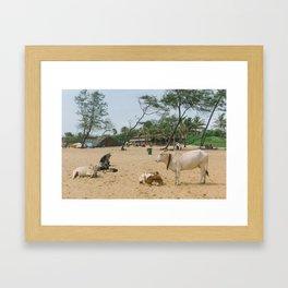 BEACH COWS Framed Art Print