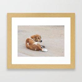 street dog Framed Art Print