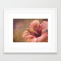 hibiscus Framed Art Prints featuring Hibiscus by Lynn Bolt