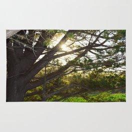 sunset through tree Rug