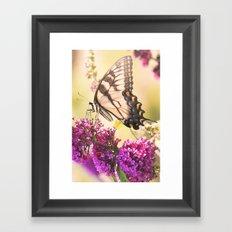 Swallowtail Butterfly Framed Art Print