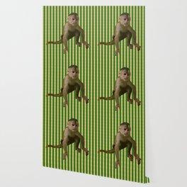 Capuchin Monkey Wallpaper