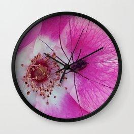 Spider on a Primrose Wall Clock