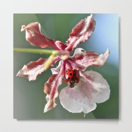Orchid and the Ladybug Metal Print