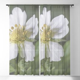 Strawberry flower Sheer Curtain