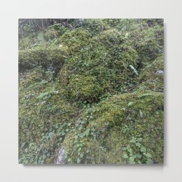 Irish Moss Metal Print