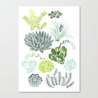 succulents Canvas Prints featuring Succulents  by Rae Ritchie