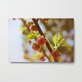 almonds in april Metal Print
