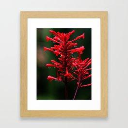 Flower Akaka Falls Big Island Framed Art Print