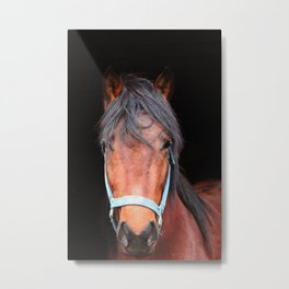 Mustang Photography Print Metal Print