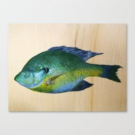 Bluegill Sunfish Canvas Print