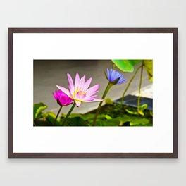 Lotus Flower Morning Framed Art Print
