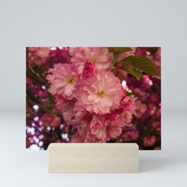 Sakura Bouquet Mini Art Print