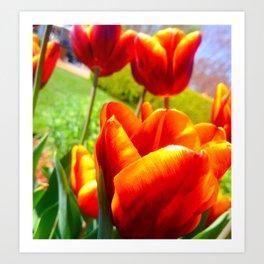 Fire Tulips Art Print