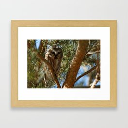 Tiny Beauty - Northern Saw-whet Owl Framed Art Print