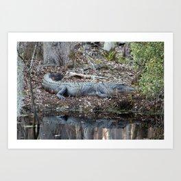 Alligator Blending In Art Print