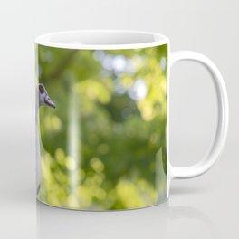 Close Up Of An Egyptian Goose Coffee Mug