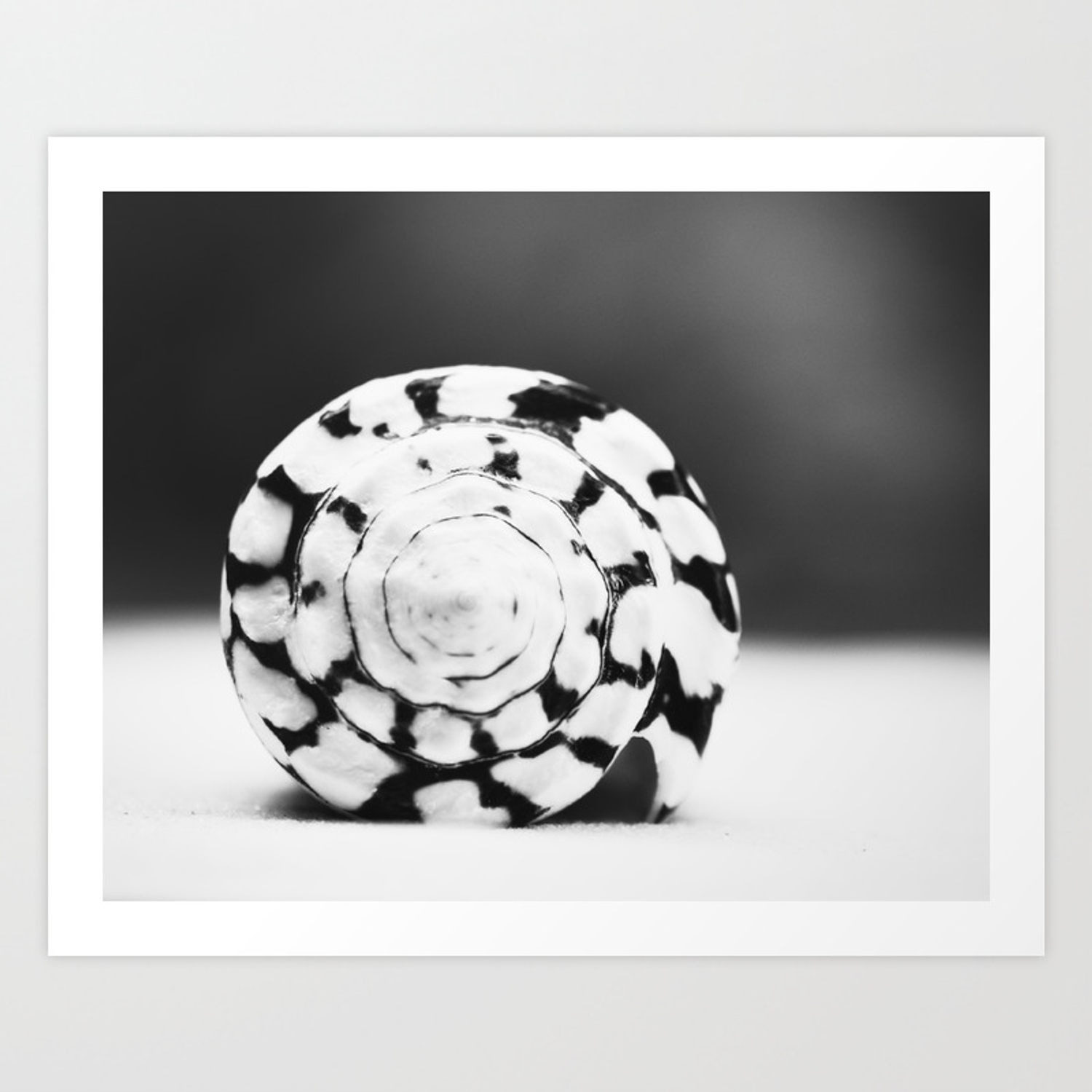Black and white seashell photography shell photo neutral beach art black white coastal photo art print