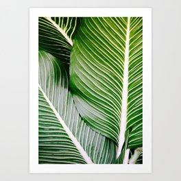 Big Leaves - Tropical Nature Photography Art Print