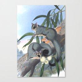 Sugar Glider Canvas Print