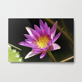 Pink Waterlily - Vizcaya Metal Print