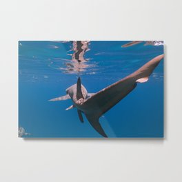 Chasing Tail Metal Print