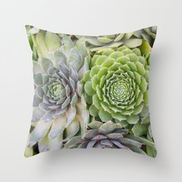 Bountiful Succulents Throw Pillow