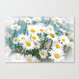 Daisies flowers in painting style 2 Canvas Print