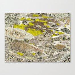 Lichens Over Bark 2 Canvas Print
