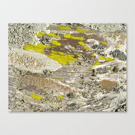 Lichens Over Bark 2 Canvas Print