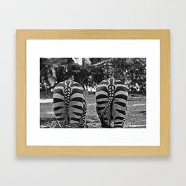 Zébre Framed Art Print