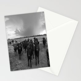Hanging Out - Black and White Photo of Cows in Kansas Stationery Cards