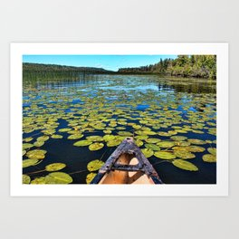 Lilies of the Lake Art Print