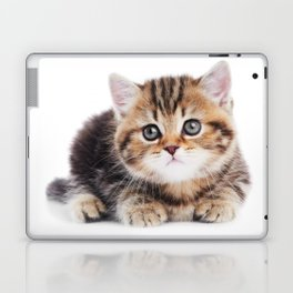 Lonely Kitten Laptop & iPad Skin